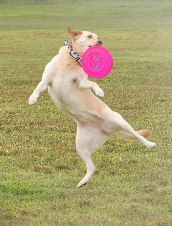 1 Photoshopped Dog Catching Disc